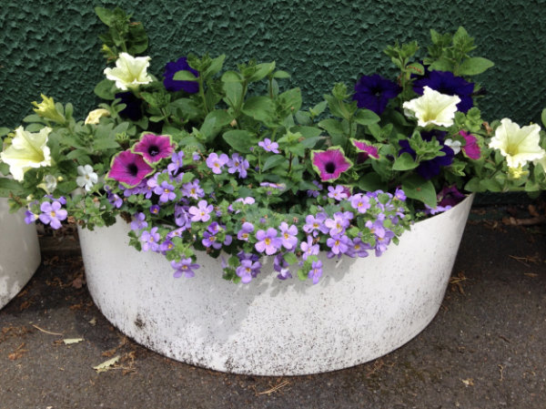 Planters for Highcliffe In Bloom 2019